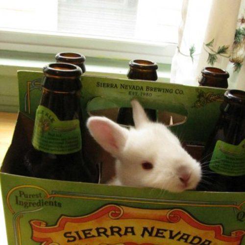 pascoa-cerveja